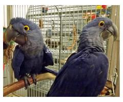PARROTS AND ACCESSORIES